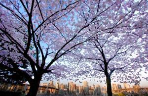 Spring Happenings In Vancouver