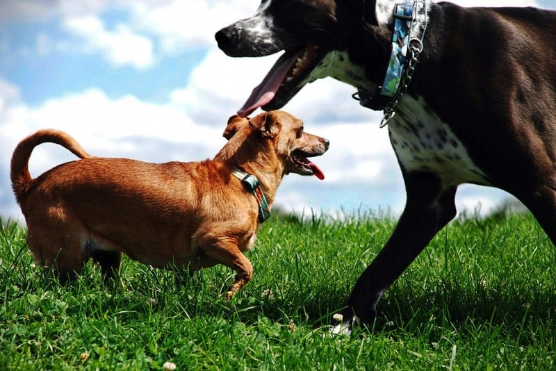 Off-Leash Dog Parks In Metro Vancouver