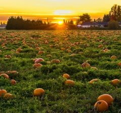 Best Pumpkin Patches In Metro Vancouver