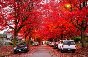 Stunning Photos Of Vancouver In Fall 2015