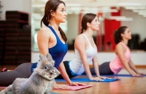 Bunny Yoga Exists, And It's Coming To Vancouver