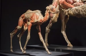 Latest Science World Exhibition Showcases Animals Inside Out