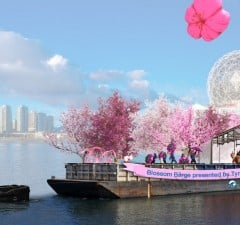 Cherry Blossom Barge To Float Around Vancouver In April