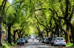 Vancouver Ranks Highest In The World For Green Canopy