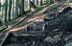 Top Hikes To Do After Work In Vancouver