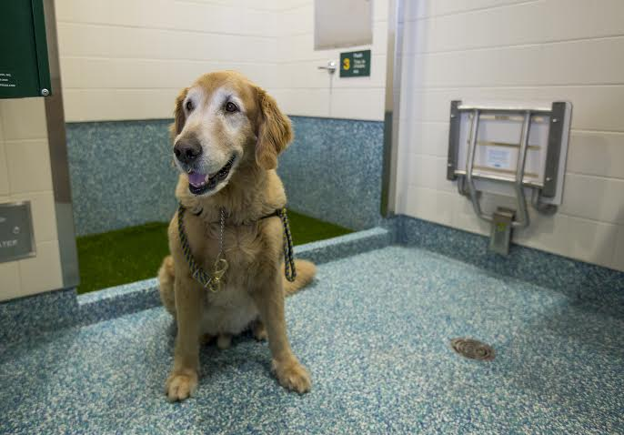 YVR Launches First Post-security Pet Relief Area