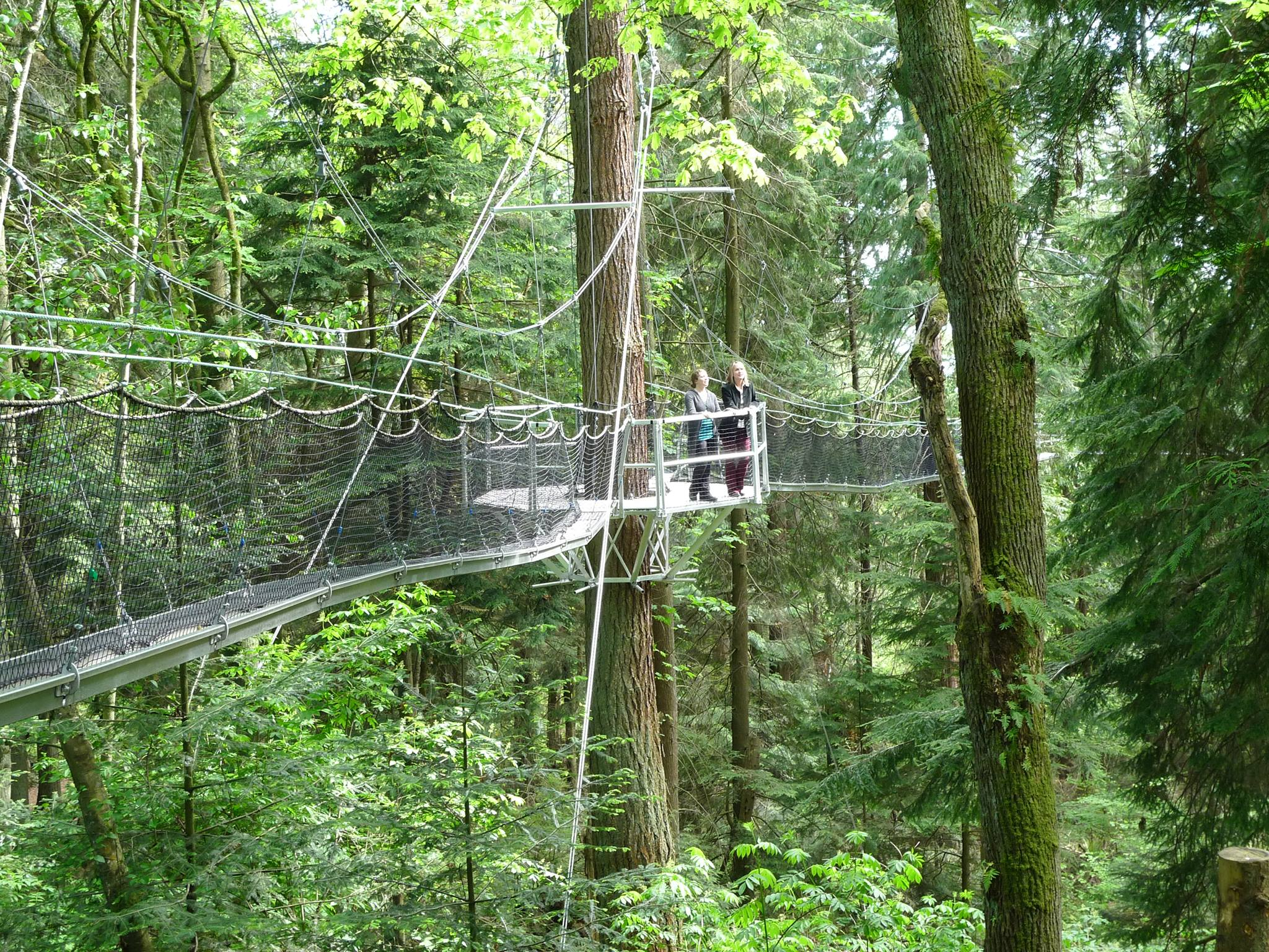 Greenheart treewalk