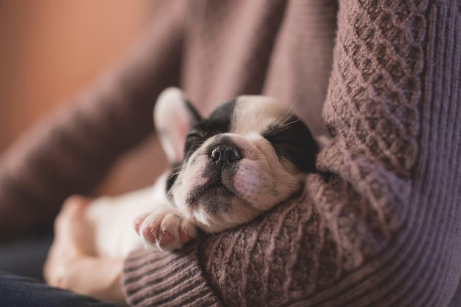 SFU Puppy Therapy | SPCA
