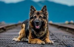 VPD Release 2017 Vancouver Police Dog Calendar