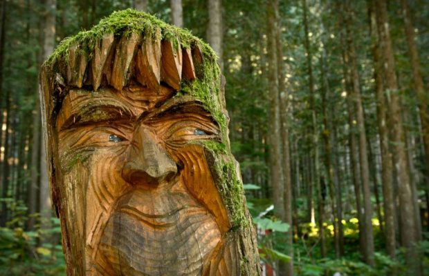 Enchanted Forest - British Columbia Destinations