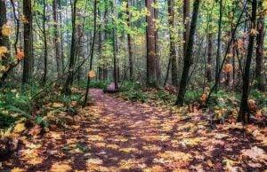 Parks Trails Surrey