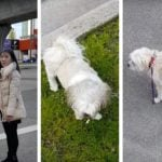 Controversial Video Of Burnaby Dog Kicker Goes Viral