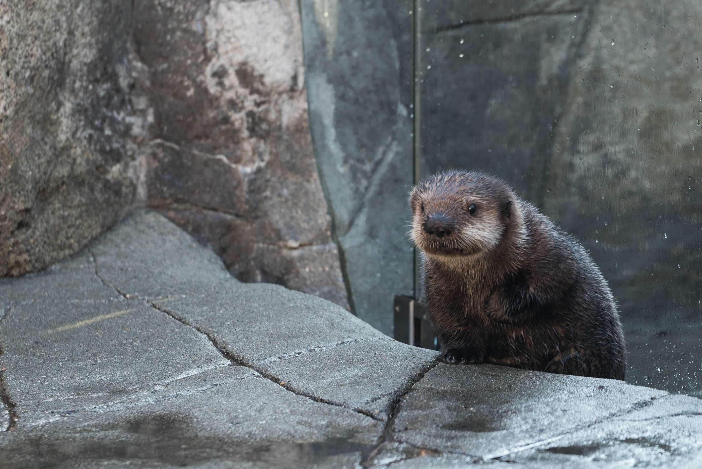 Vancouver Aquarium / Accommodations in BC