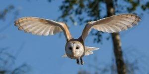 owl delta