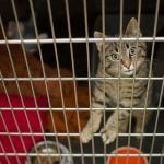 Surrey Just Banned The Sale Of Cats, Dogs And Rabbits In Retail Stores