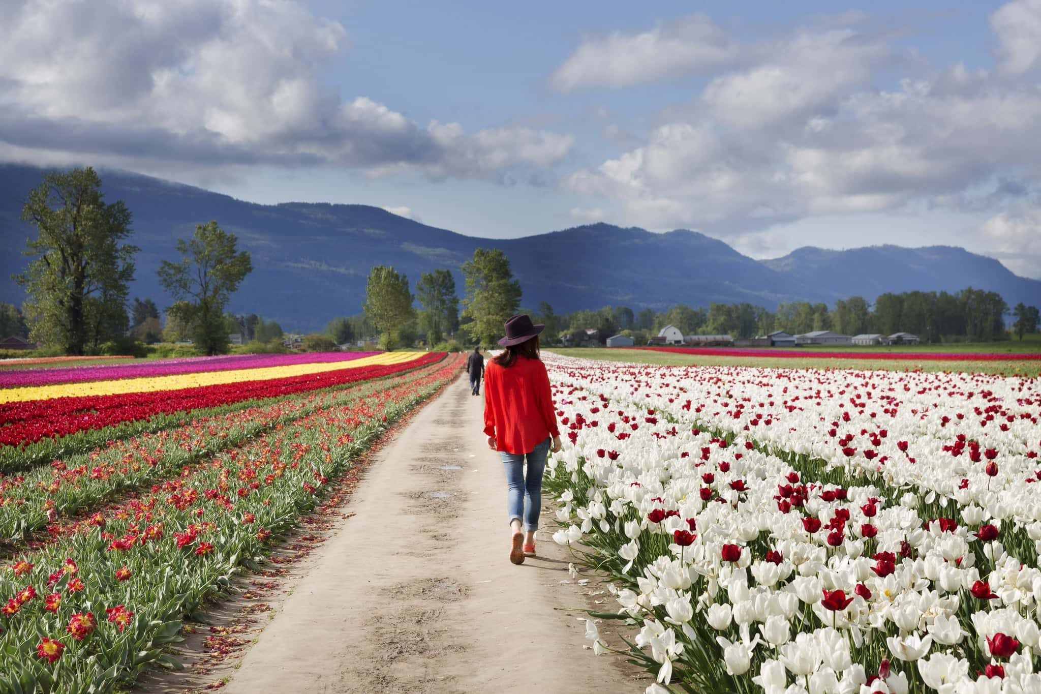 Locals Can Visit The Chilliwack Tulip Festival For Just $4 This Month