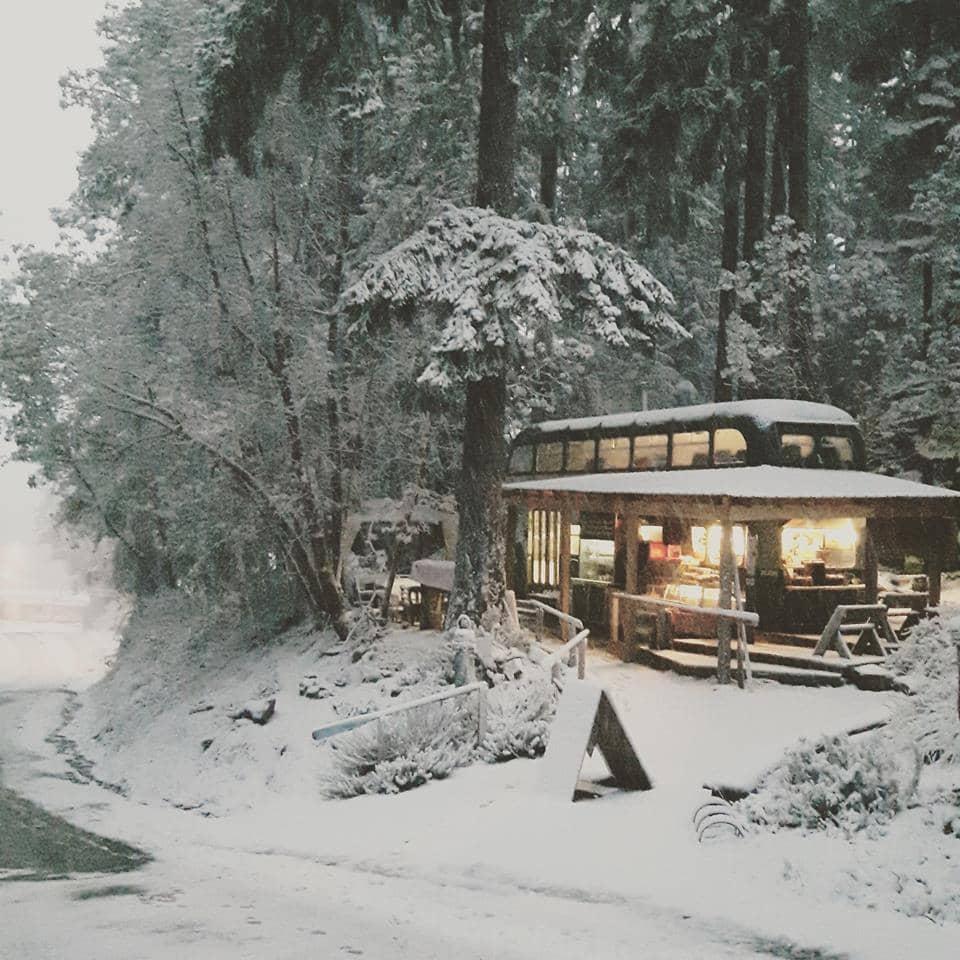 wild thyme coffee house