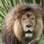 On The Brink – Carnivore Conservation 2020