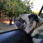 BC SPCA Receives 400 Reports Of Dogs In Hot Cars Before Start Of Summer
