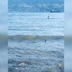 Shark Spotted Swimming Along The Kitsilano Beach Shoreline
