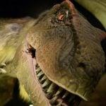 Museum After Dark: Dinosaurs 2018