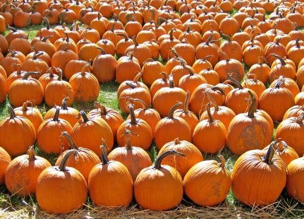 Haunted Harvest Fair