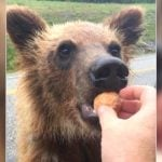 Two People Just Got Charged For Sharing Their Timbits With BC Bears