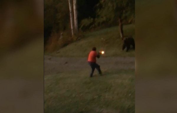 grizzly bear shot