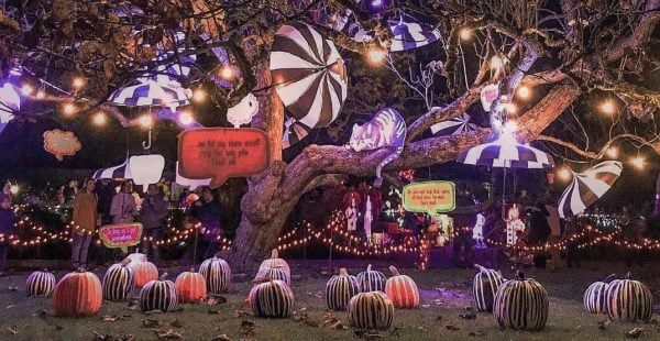Glow In The Garden - Things To Do Vancouver