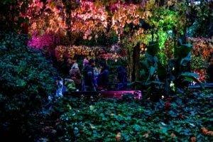 Bear Creek Park Light Festival