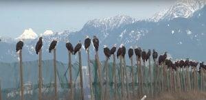 Vancouver landfill