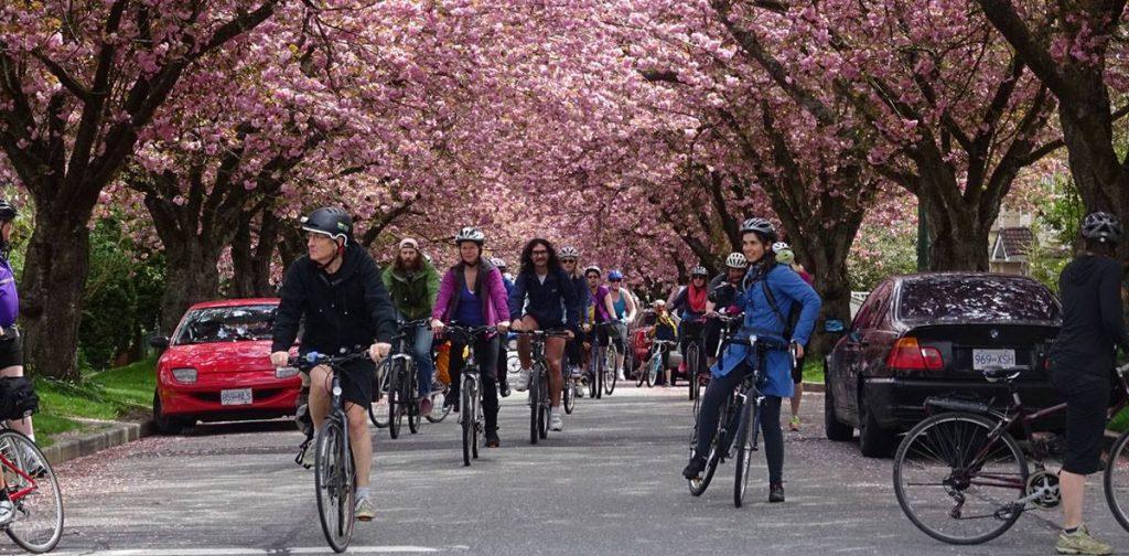 Bike The Blossoms