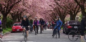 Bike The Blossoms