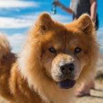 Biggest Dog Meet-Up Vancouver 2019