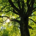 Vancouver Park Board Tree Sale 2019
