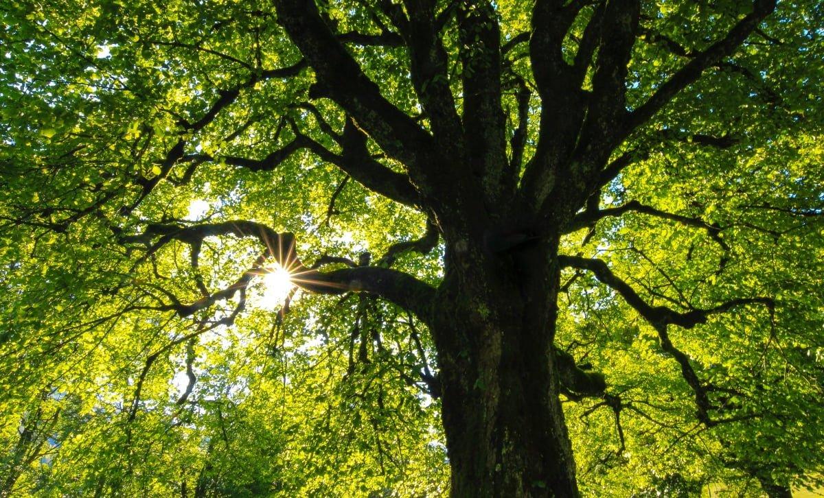 Vancouver Park Board Tree Sale
