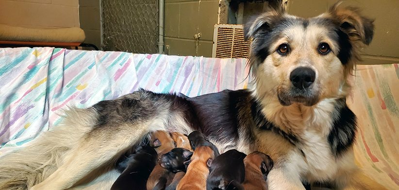 BC SPCA Looking For Owner Who Abandoned Mother Dog & Puppies At Garbage Dump