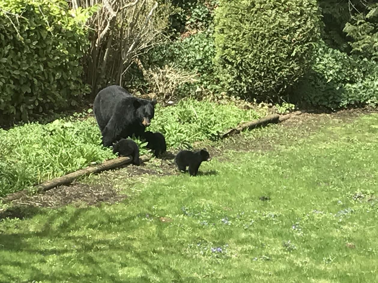 Metro Vancouver Park Partially Closed Due To Bear Activity