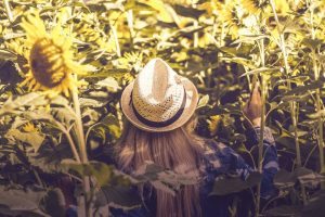 Here's Three Sunflower Festivals You Need To Explore Right Now