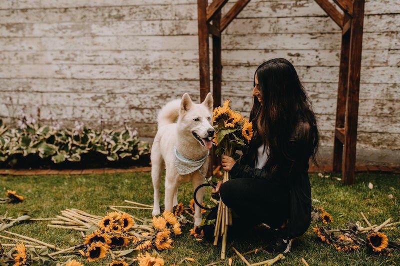 abbotsford sunflower festival