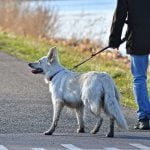 Vancouver Has 6,900 Tonnes of Dog Poop And Isn't Quite Sure How To Deal With It
