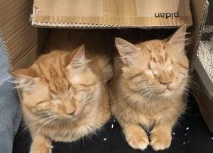 Blind Cat Siblings