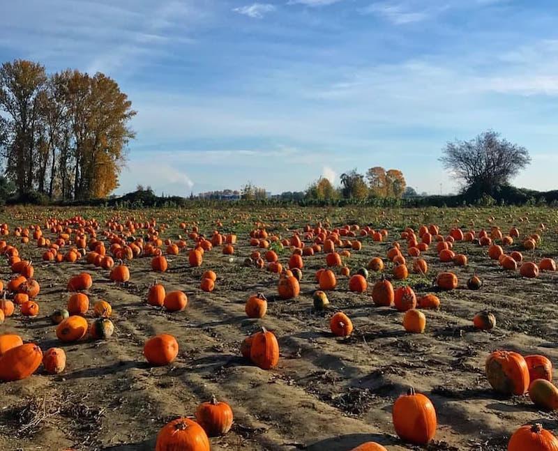 metro vancouver pumpkin patches