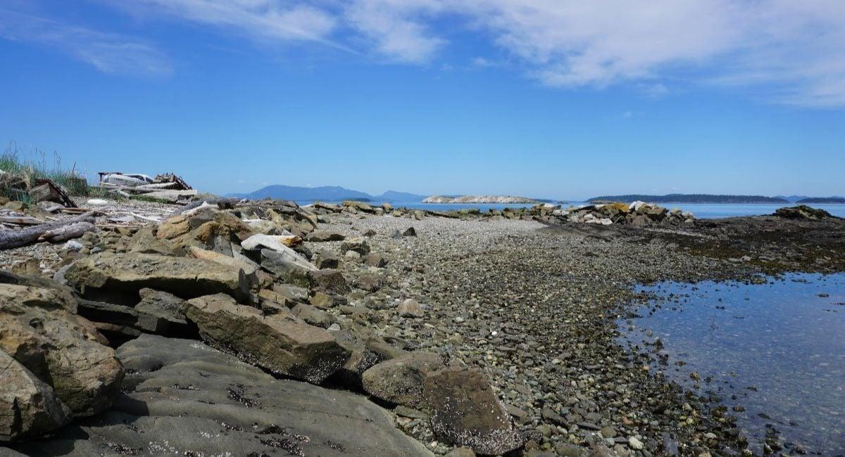 Halibut Island