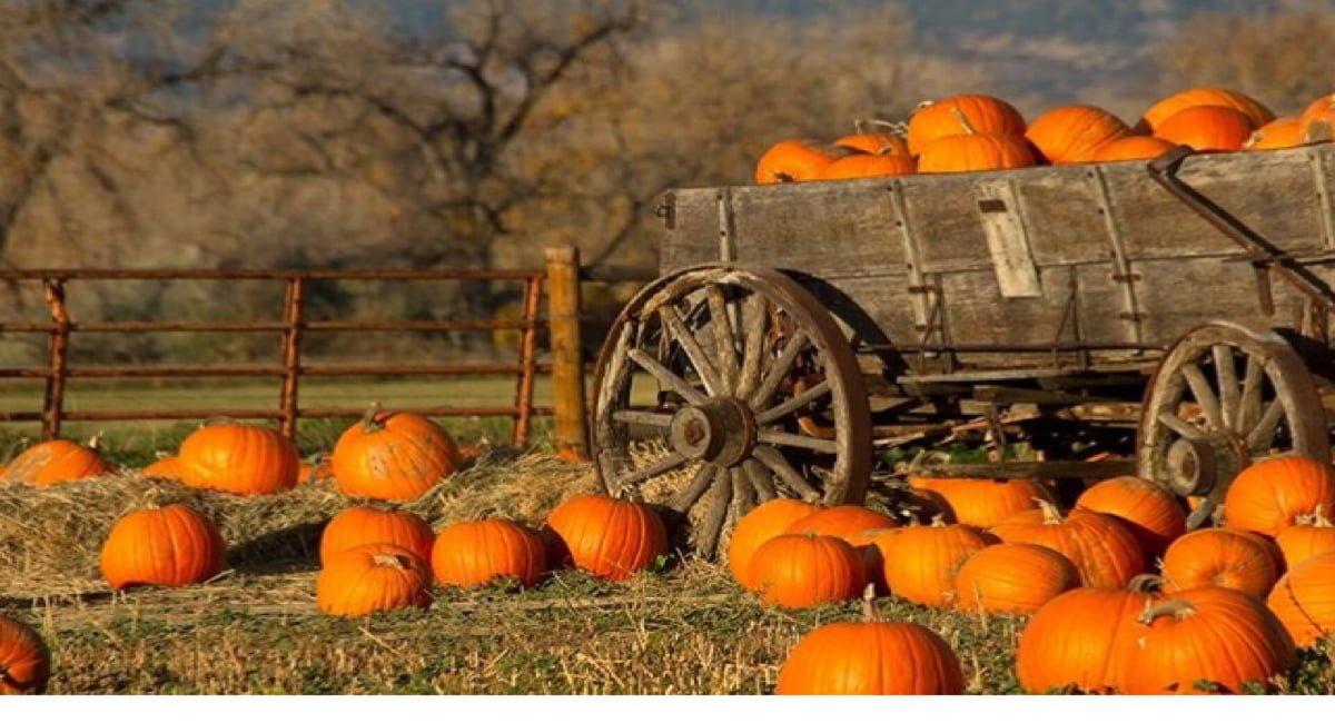 Tsawwassen Mills Halloween