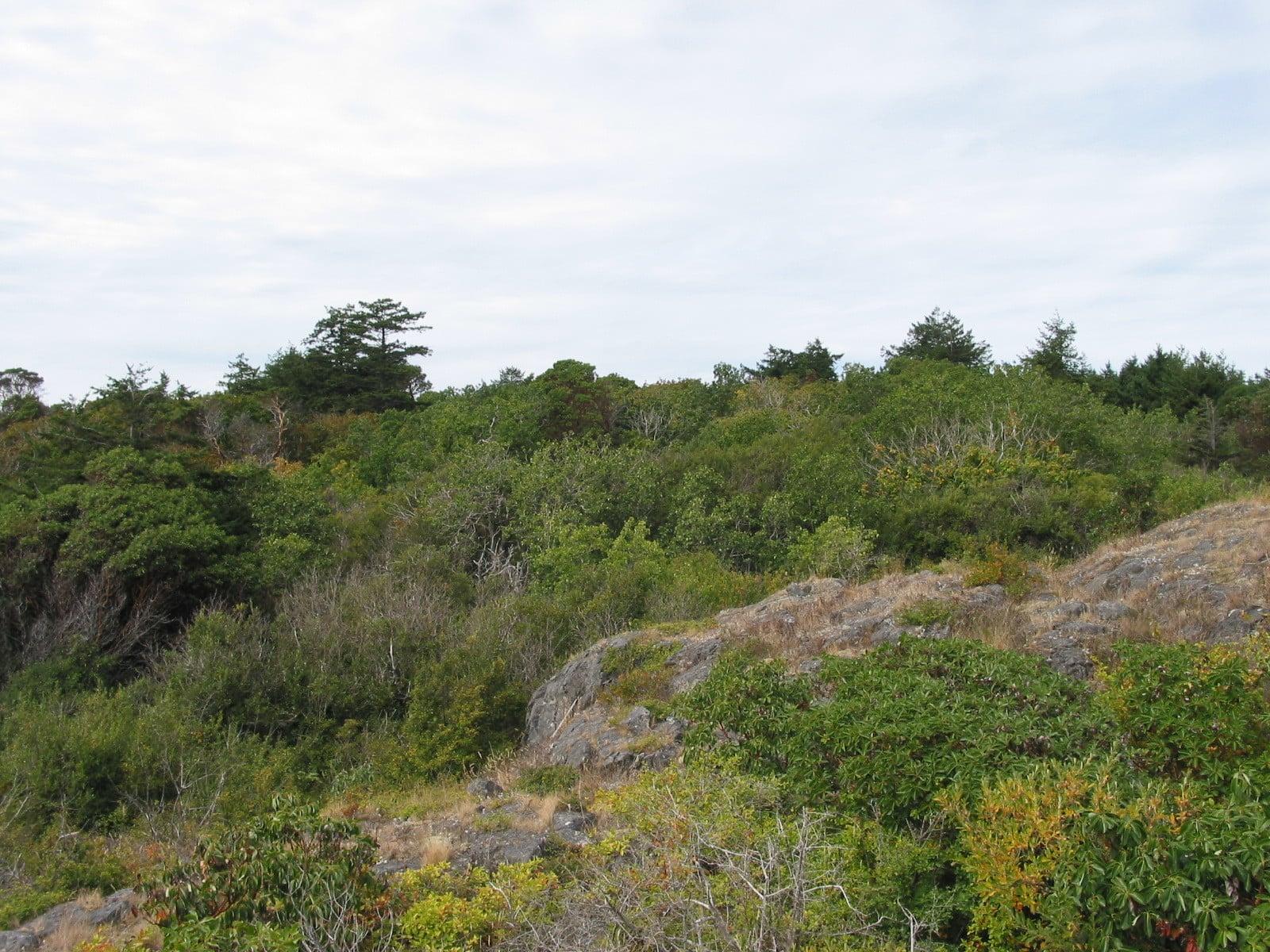West Ballenas Island