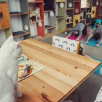 Cat Yoga & Meowditation at the Catfe