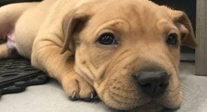 BC SPCA sale