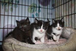 SPCA Seizes 136 cats
