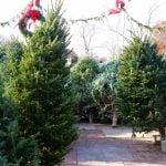 Christmas Tree Thief Caught Stealing From B.C. Backyard (VIDEO)